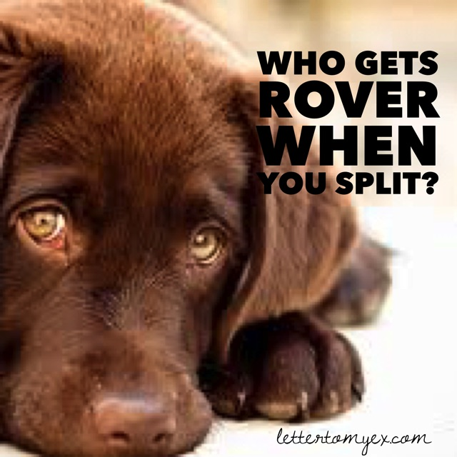 who-gets-rover
